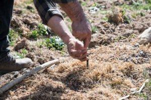Read more about the article Biodiversità Viticola