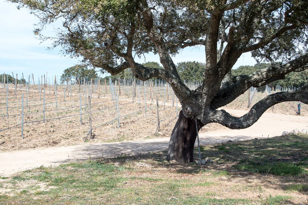vineyard-nature-gallura-Sardinia