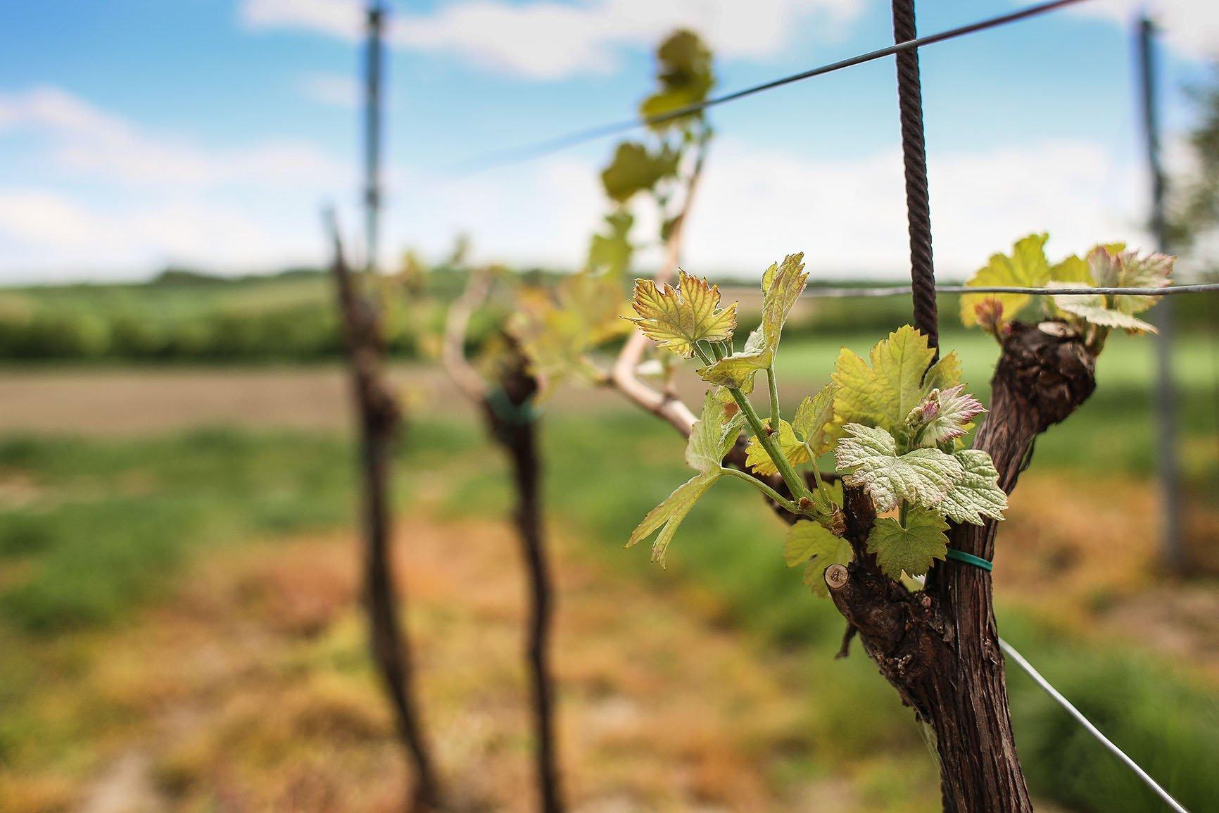 You are currently viewing I vini della Gallura